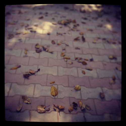 Fallen leaves at PU, Chandigarh